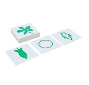 Cartes du cabinet de botanique