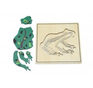 Puzzle grenouille avec...