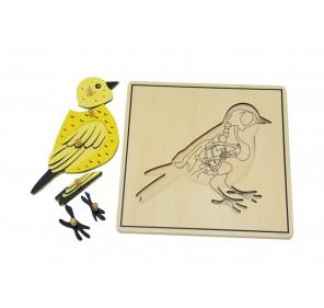 Puzzle oiseau avec squelette