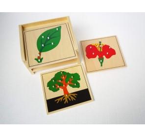 Cabinet 3 puzzles botanique