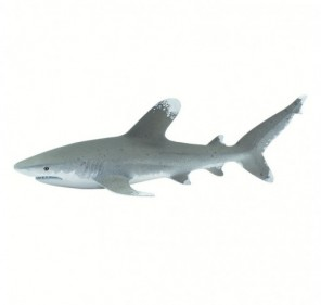 Requin océanique